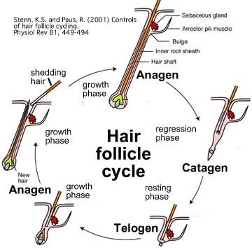 haircycle